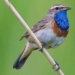 UK Birds Sounds  APK Free Download
