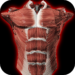 Muscular System 3D (anatomy)  APK Download (Android APP)