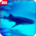 Blue Whale : Shark Hunger Sim 2018  APK Download (Android APP)