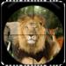 Jungle Sniper 3d 1.9.1 APK Download (Android APP)